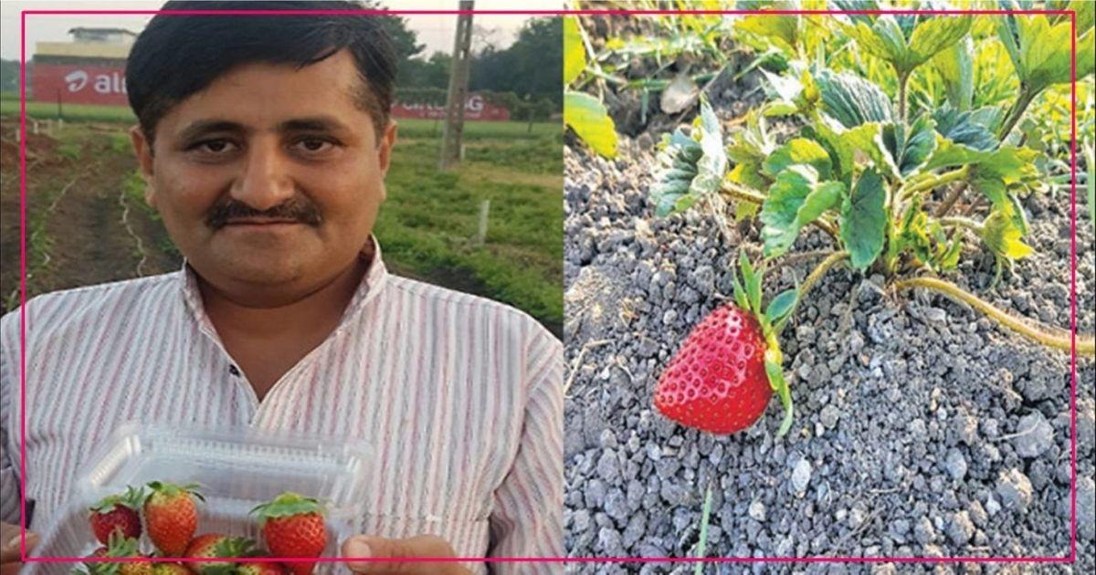 20 લાખ નોકરી છોડી ને આ વ્યક્તિએ ખેતી શરૂ કરી સ્ટ્રોબેરીની, થઇ ગયા માલા માલ..