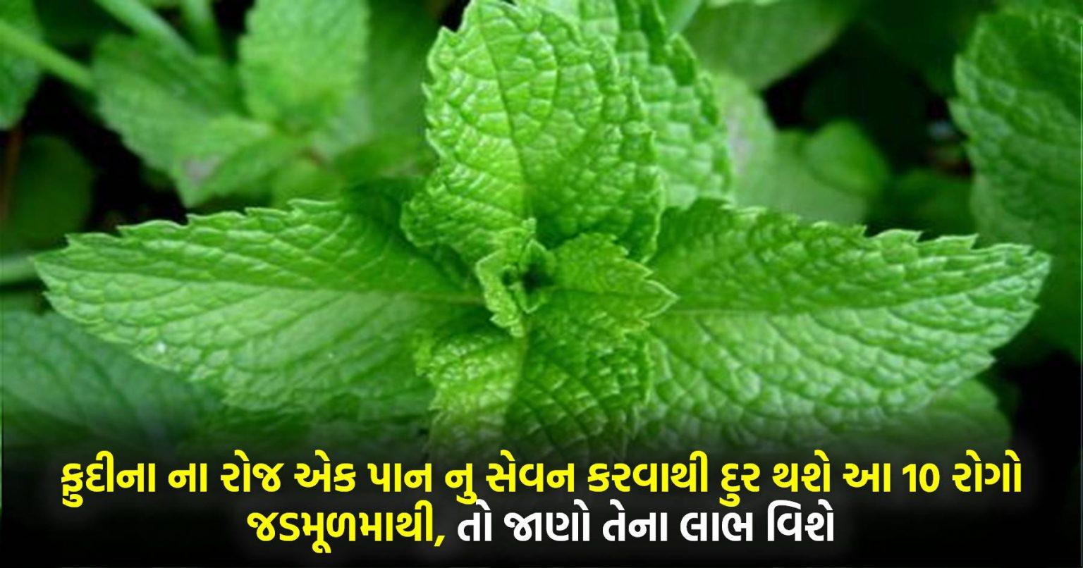 ફુદીના ના રોજ એક પાન નુ સેવન કરવાથી દુર થશે આ 10 રોગો જડમૂળમાથી, તો જાણો તેના લાભ વિશે