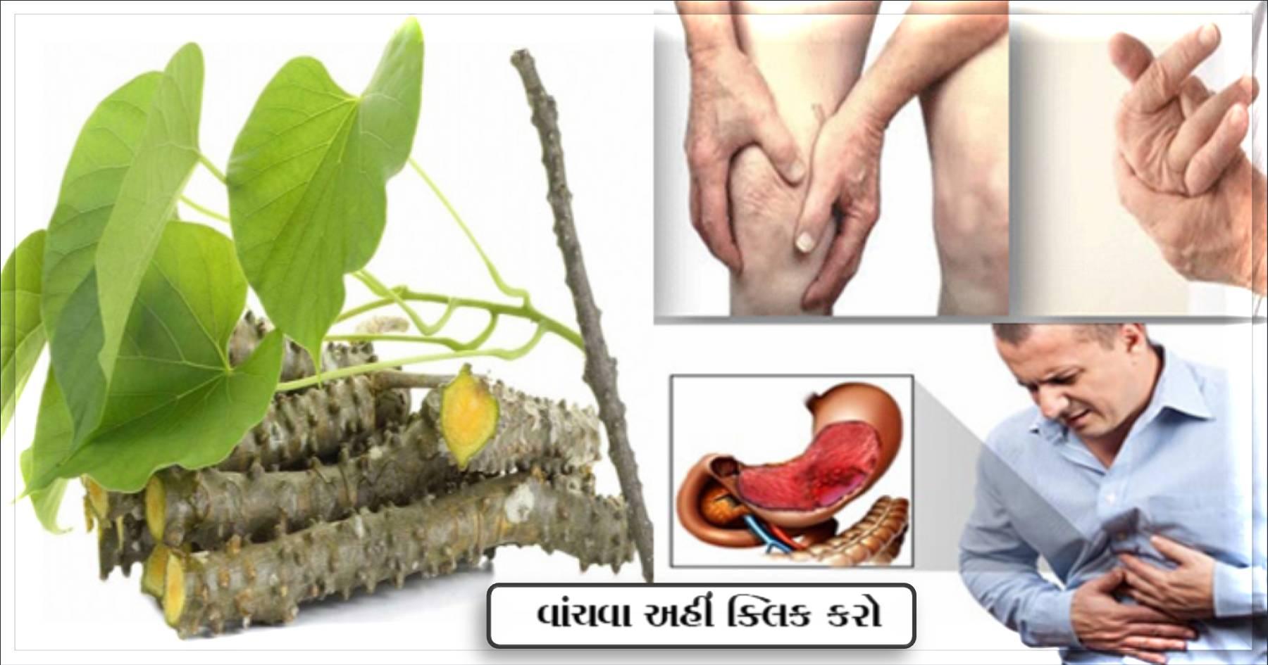 આ છોડ માં ઘણા રોગો ને જડમૂળ થી કરે છે દુર, તેના ફાયદા જાણીને તમે ચોંકી જશો…..
